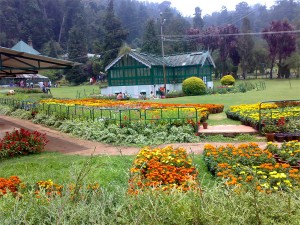 visiting places Ooty during christmas